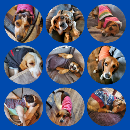 Your Pups & Cold Weather!