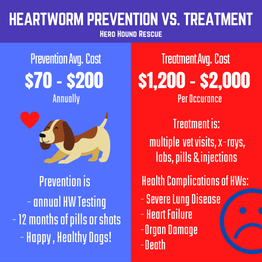 Heartworm Prevention is a MUST!